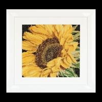 Thea Gouverneur  488A  Sunflower  Aïda