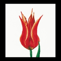 Thea Gouverneur  515A  Red Yellow  Lily  Tulip  Aïda