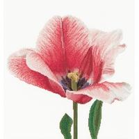 Thea Gouverneur  518A  Tulipe