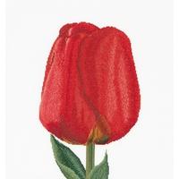 Thea Gouverneur  521A  Tulipe
