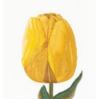 Thea Gouverneur  522  Tulipe