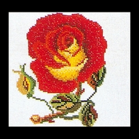 Thea Gouverneur  818A  Rose  Rouge  Jaune  Aïda