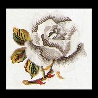 Thea Gouverneur  820A  Rose  blanche  Aïda