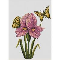 Orchidée et papillons  LUCA-S  B224