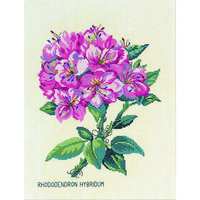 RHODODENDRON ROSE  EVA ROSENSTAND  12-895