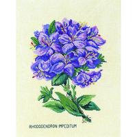 RHODODENDRON  LILAS  EVA ROSENSTAND  12-894