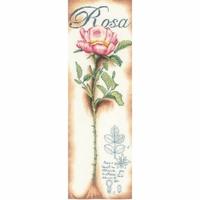 ROSES ROSE  LANARTE  0154334
