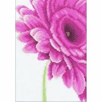 Fleurs de Gerbera  0008122   LANARTE