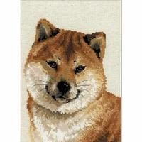 Shiba inu chien  1280  RIOLIS