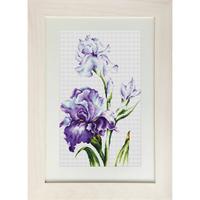Fleurs Iris - Luca-S - B2251