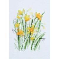 Narcisse printanière  1180  Riolis