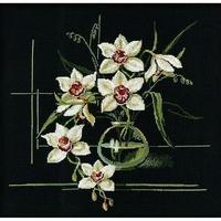 Orchidée blanche  941  Riolis