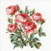 Roses de jardin  1046  Riolis