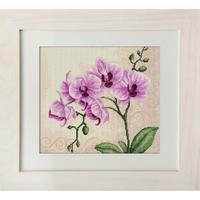 Branche d Orchidée - Luca-S  B2227