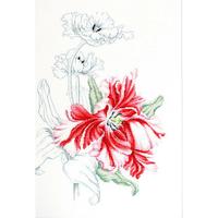 Tulipes rouges  Luca-S  B2241
