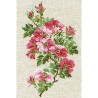 Roses sauvage  809  Riolis