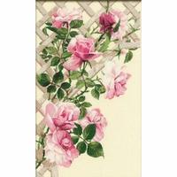 Roses de jardin  898  Riolis