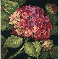 Hortensia en fleur  20053  Dimensions
