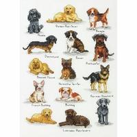 Races de chiens  70-35353  Dimensions
