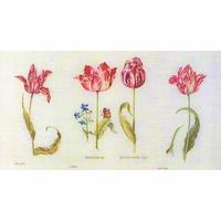 Tulipes  786  Thea Gouverneur