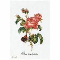 Thea Gouverneur 2030A  Rose Redouté