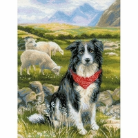 Border collie  1767  Riolis