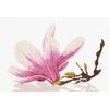 Lanarte  Magnolia  0008162