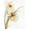 Lanarte  Orchidée  0008014