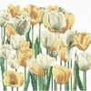 Thea Gouverneur  Tulipes  3065