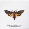 Papillon de nuit 563 Thea Gouverneur