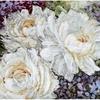 Roses blanche 930 Letistitch  Kit point de croix