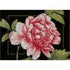 Rose rose  Lanarte  0155749