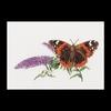 Thea Gouverneur  436  Papillon Budlea