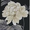 FLEURS BLANCHE  MAIA  5678000- 01083