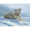 Tigre Siberie  5678000-01011  MAIA