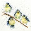 Sweet Tweet  XHD4  Bothy Threads