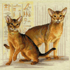 Chat abyssiniens  1671  Riolis