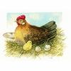 Poule avec son poussin  0165381  LANARTE