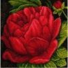 Pivoine rouge  0144515  Lanarte