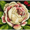 Pivoine rose  0144517  Lanarte