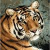 Tigre rêveur  1282  RIOLIS