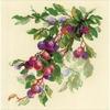 Branche de prunes  1616  RIOLIS