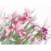 Irises  100-024  RIOLIS