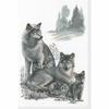 Loups  100-021  Riolis