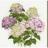 Fleurs d hortensia  1246  Riolis