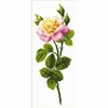 Rose  1331  Riolis
