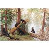 Matinée dans une Forêt de pins  B452  Luca-S