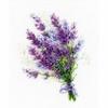 Bouquet de Lavande  1607  Riolis