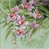 Orchidée  1401  Riolis