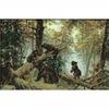 Ours dans une forêt de pins - Riolis 536